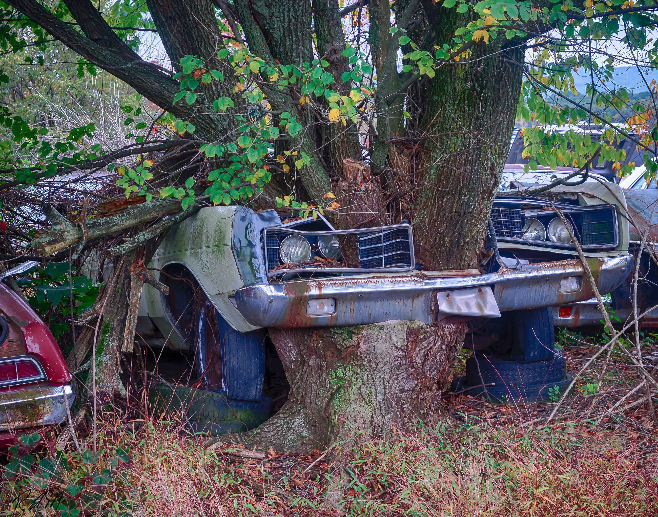 Abandoned-Cars-7