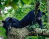 Black Bears-3