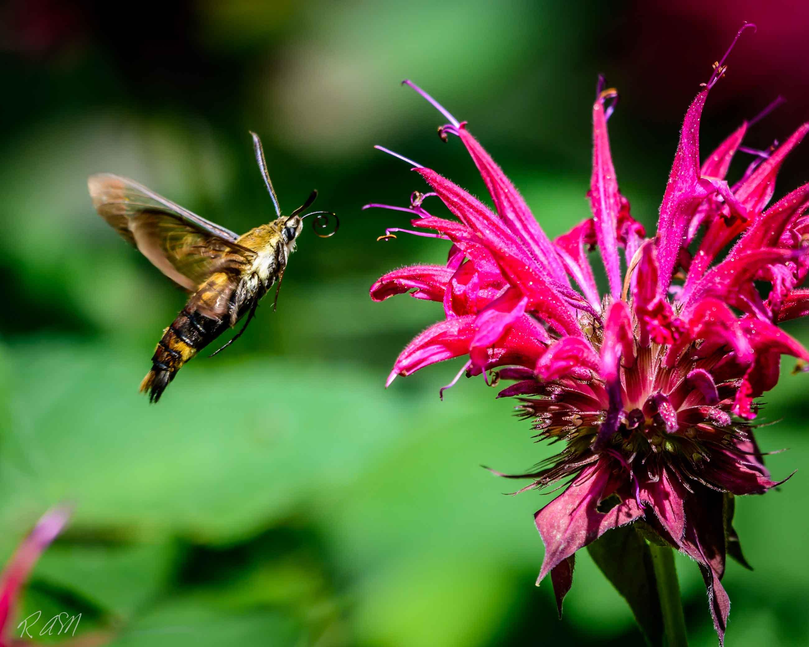 Butterflies-19
