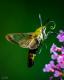 Butterflies-21