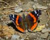 Butterflies-8