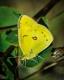 Butterflies-4