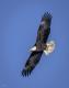 Eagles-9