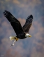 Eagles-7