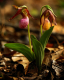 Pair Pink Lady Slippers #4