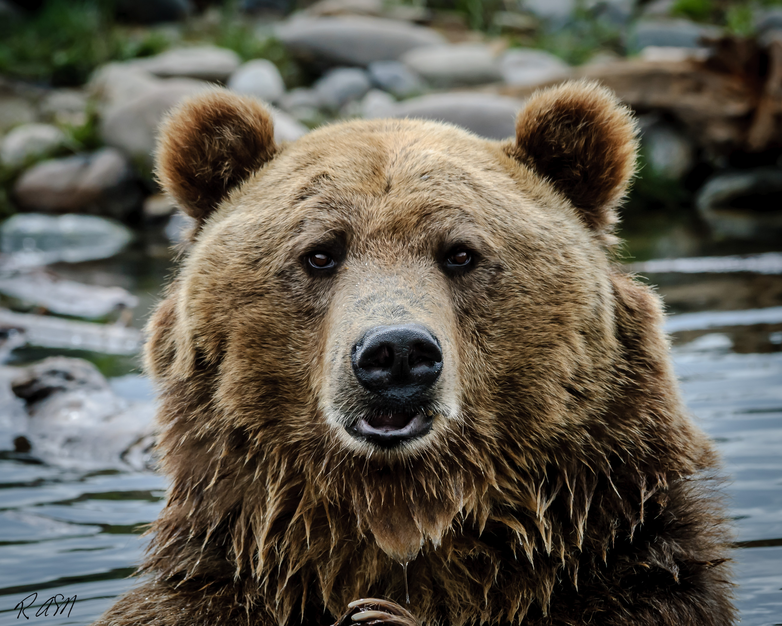 Grizzley Bears-7