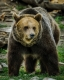 Grizzley Bears-1