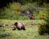 Grizzley Bears-4