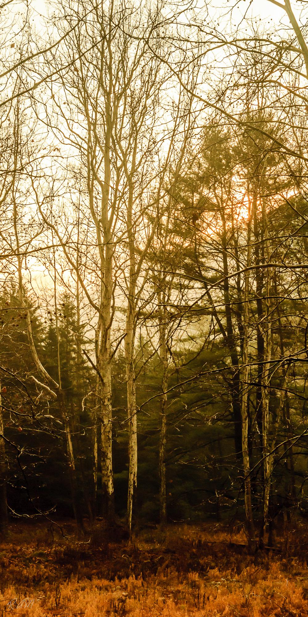 Cabin Sunrise-1