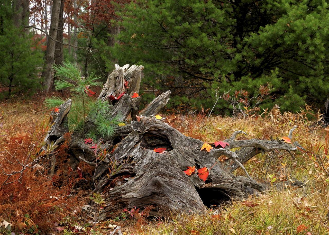 Fall Stump