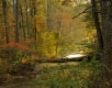 Fall Little Buffalo creek