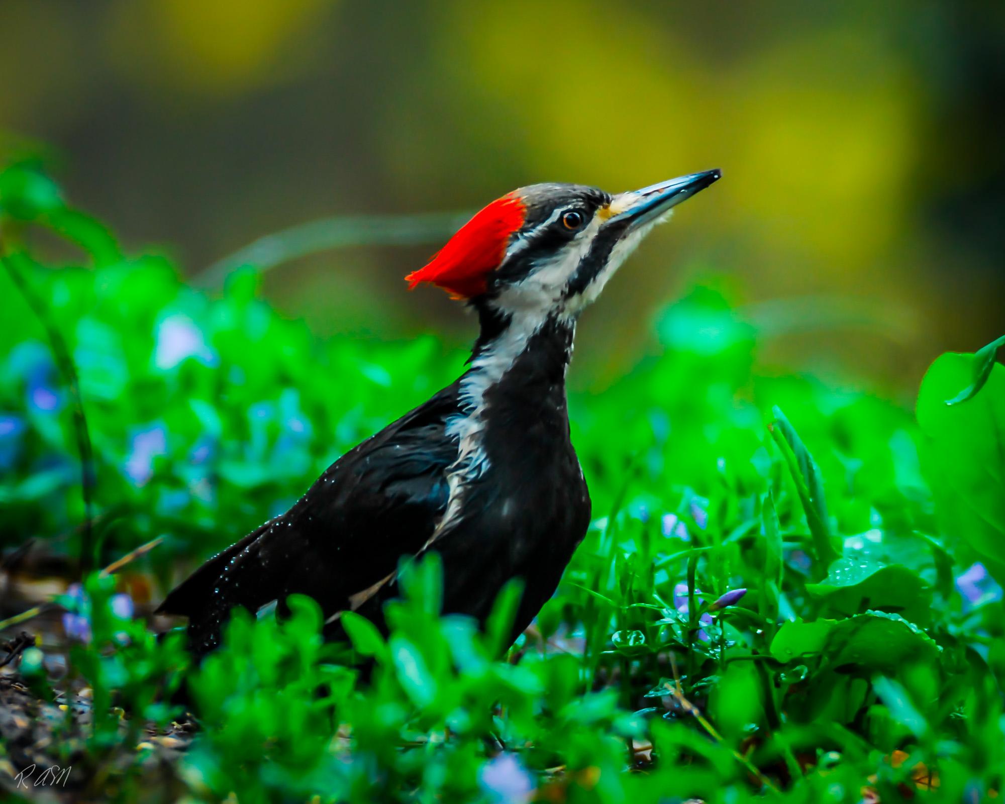 Wild Birds-1