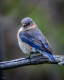 Wild Birds-7