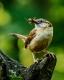Wild Birds-3