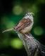 Wild Birds-4