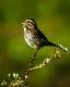 Wild Birds-5