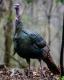 Wild Birds-8